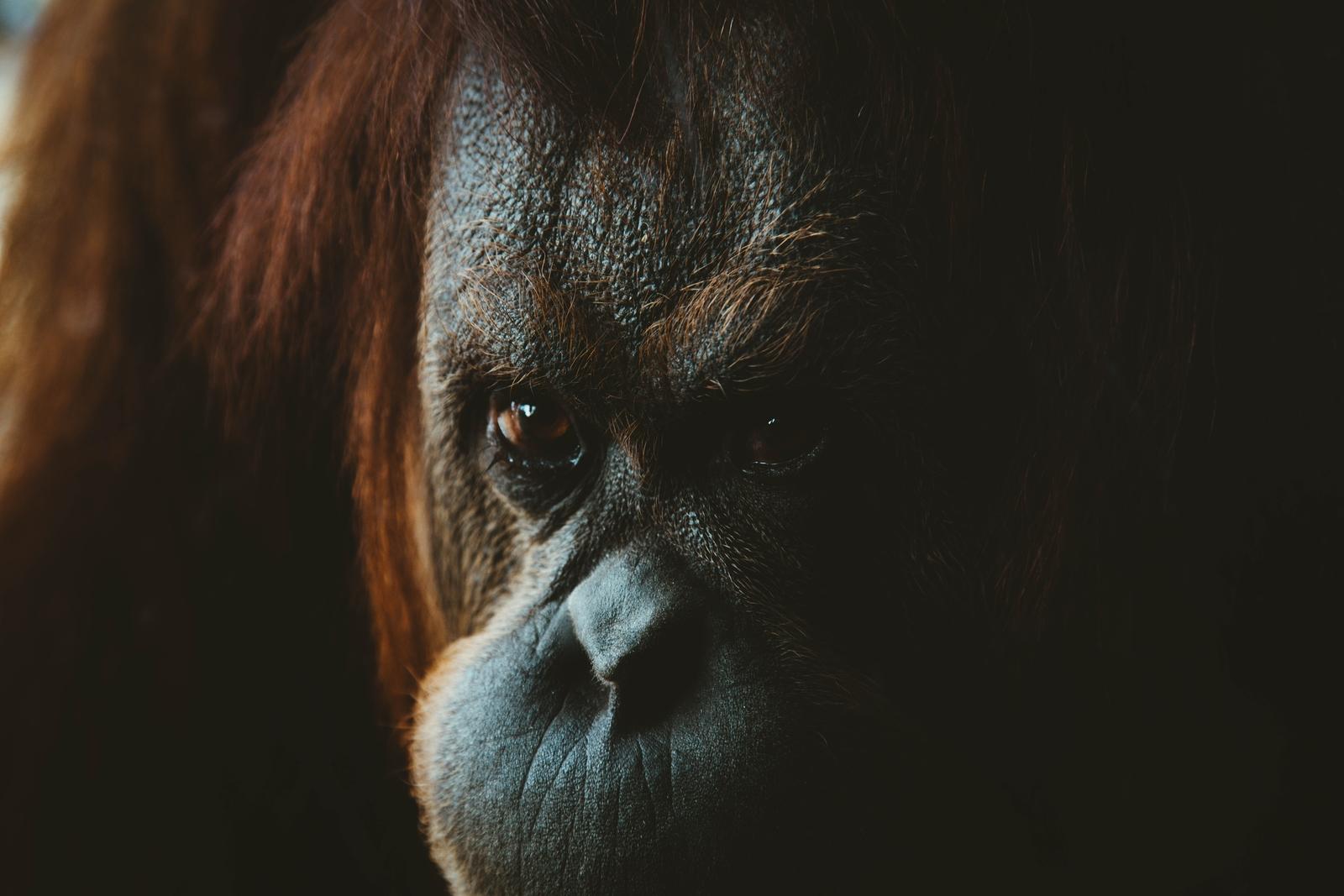 Renoncer à l'huile de palme, un choix santé et écologique.