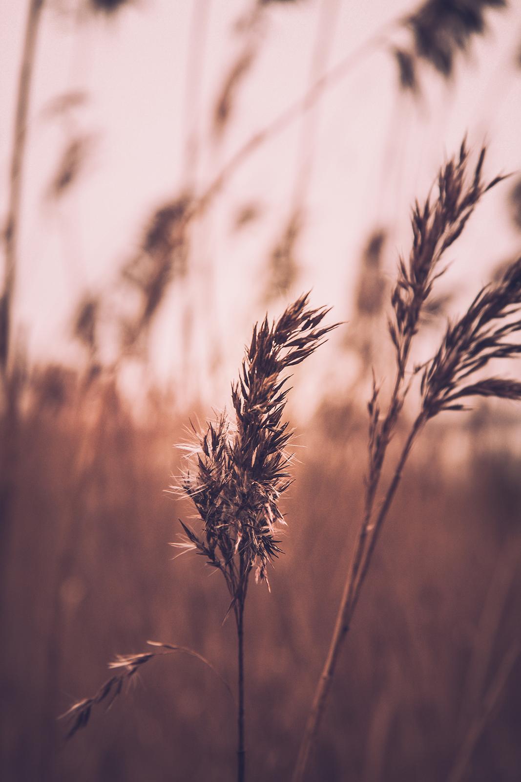 La transformation du blé à travers le temps