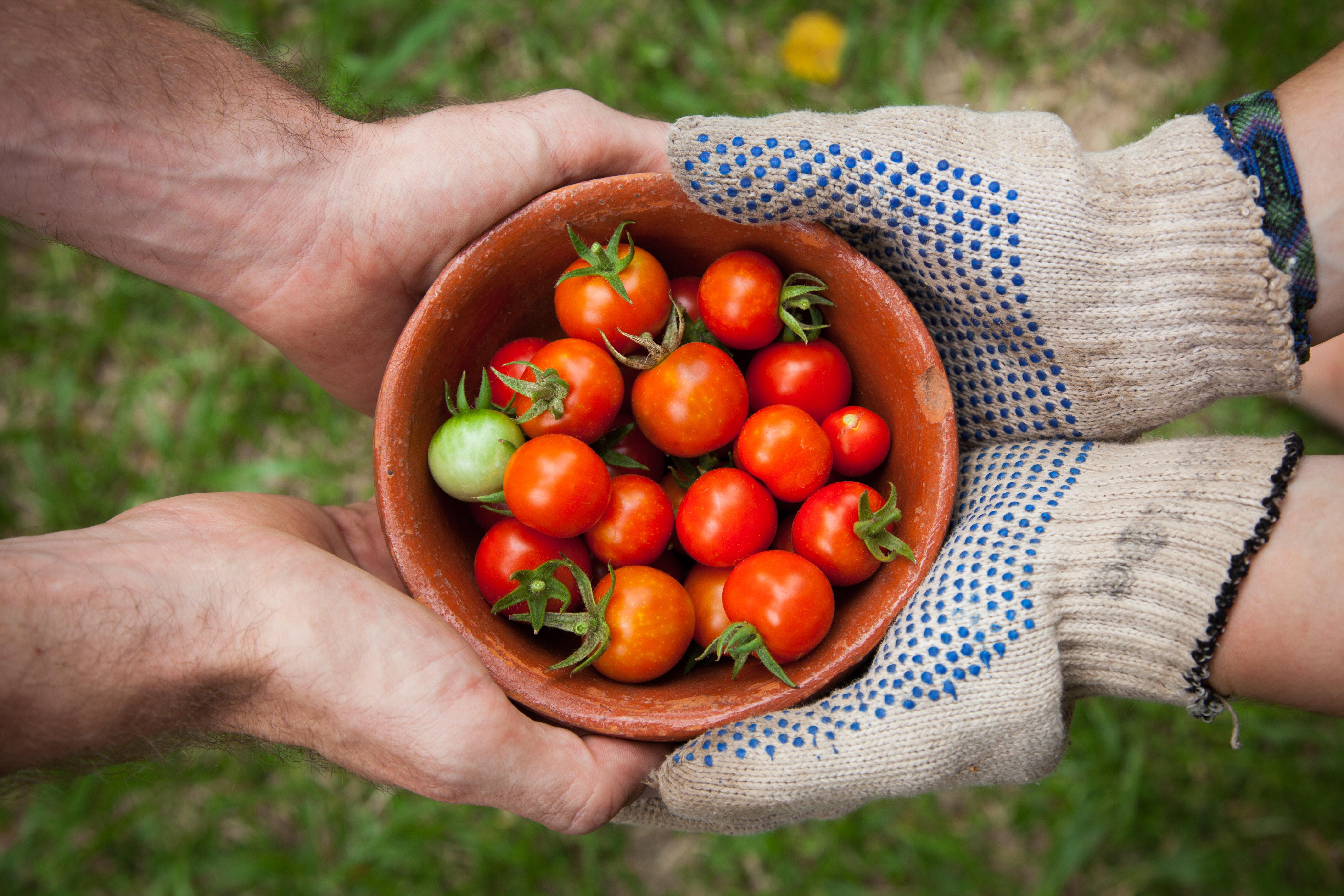Savoir distinguer les différents logos et certifications se retrouvant sur nos aliments.